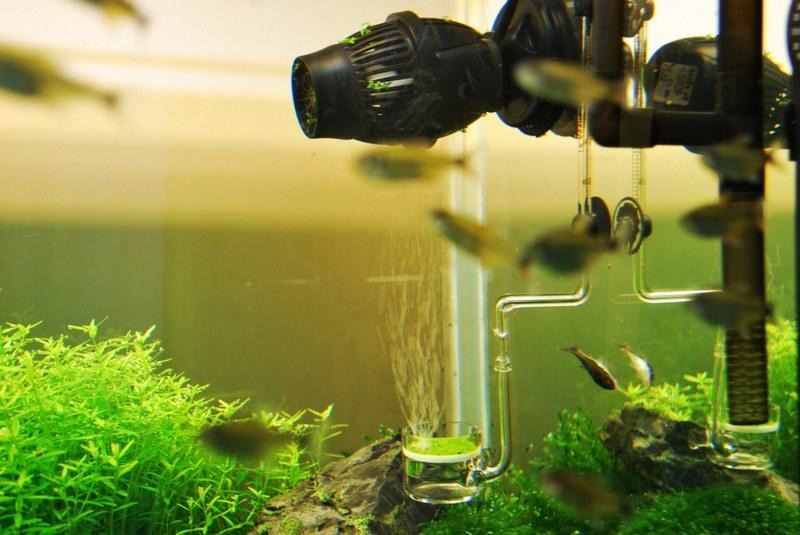 Аквариум для гурами необходимо оборудовать фильтрами, не создающими значительные потоки воды