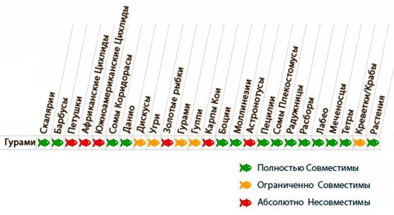 Таблица совместимости гурами с другими аквариумными обитателями
