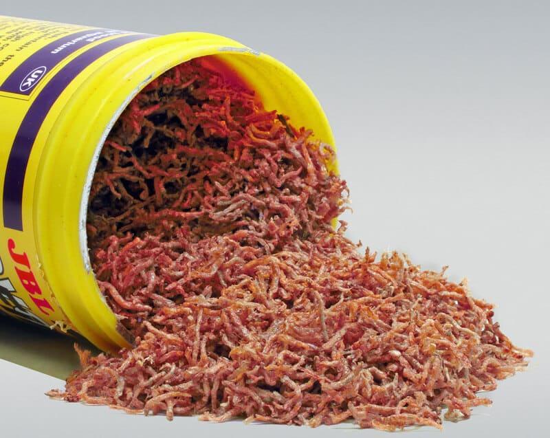 Необходимо давать белковосодержащие продукты, например, мотыля