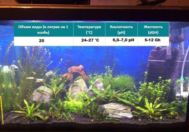 Основные требования к параметрам воды в аквариуме