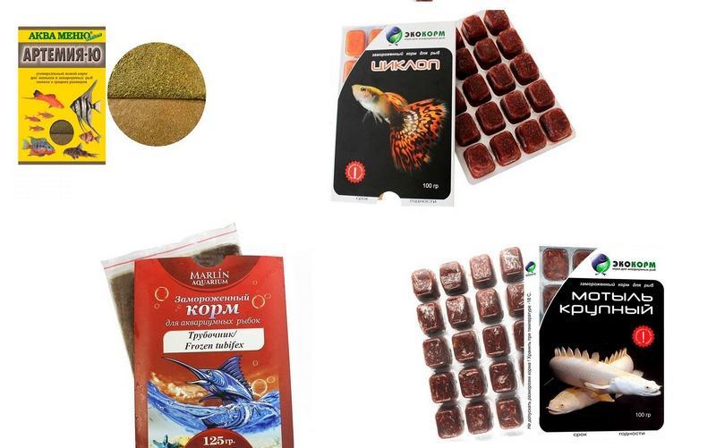 Разновидности кормов для кормления гурами