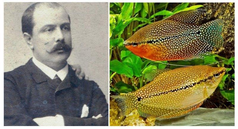 В XIX веке жемчужный вид открыл французский ученый-натуралист Пьер Карбонье