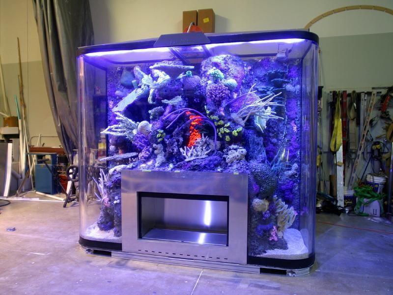 самые красивые домашние аквариумы фото создают