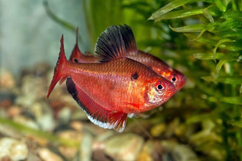 Новых рыб держат 2 недели на карантине