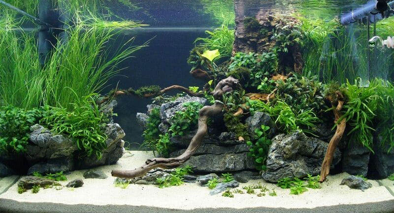 Каряги и камни - отличное укрытие для рыбок