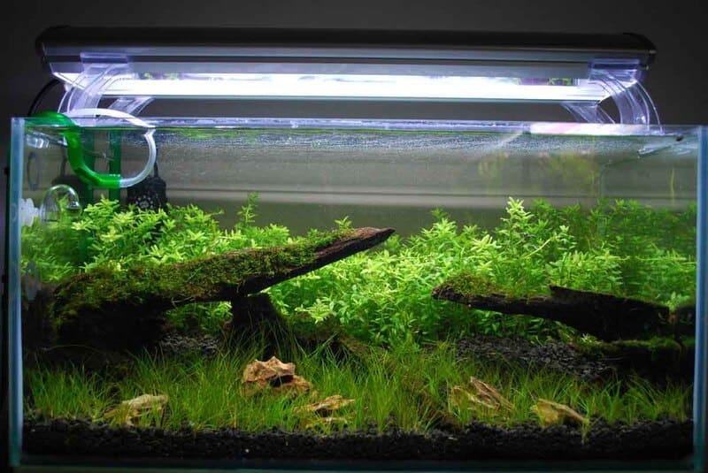 Над аквариумом необходимо установить люминесцентные лампы