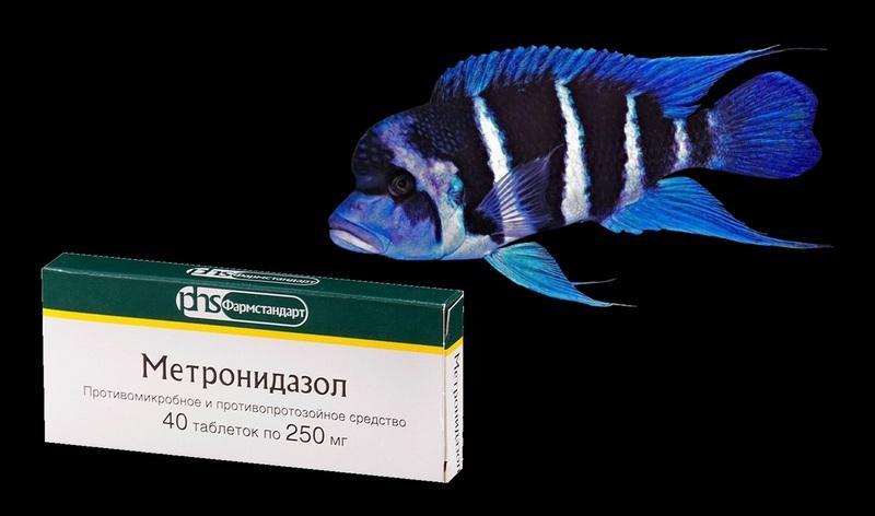 Для лечения заболевших рыбок используют Метронидазол