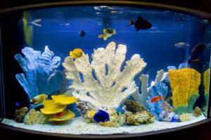 Кораллы, размещенные в аквариуме, сделают воду жесткой