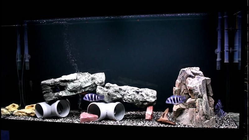 Пример простой композиции для аквариума с фронтозами