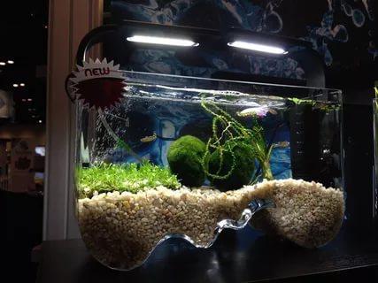 Декоративные аквариумы виды