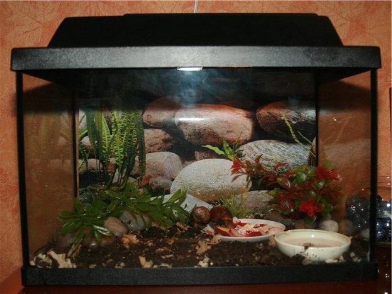 аквариум для улиток ахатин грунт