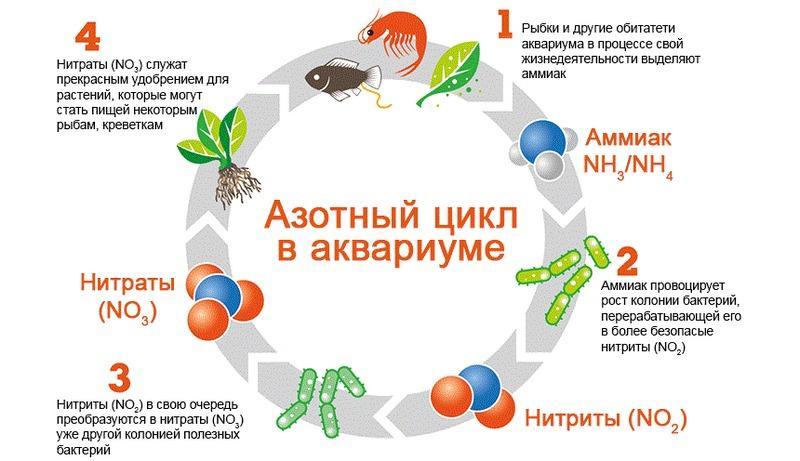 Азотный цикл необходим для правильной биологической фильтрации в аквариуме