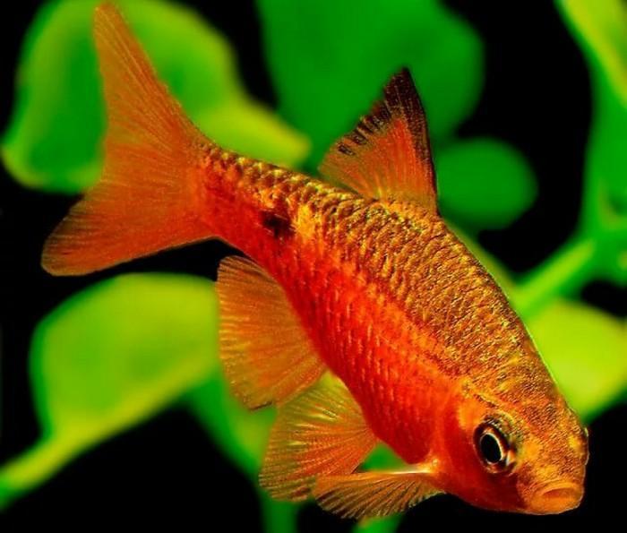 Чем больше окружение напоминает естественную среду обитания, тем меньше стресса будет у рыб