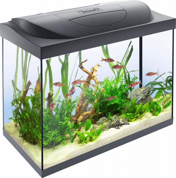 Для содержания стайки из 6 особей необходим аквариум от 80 л