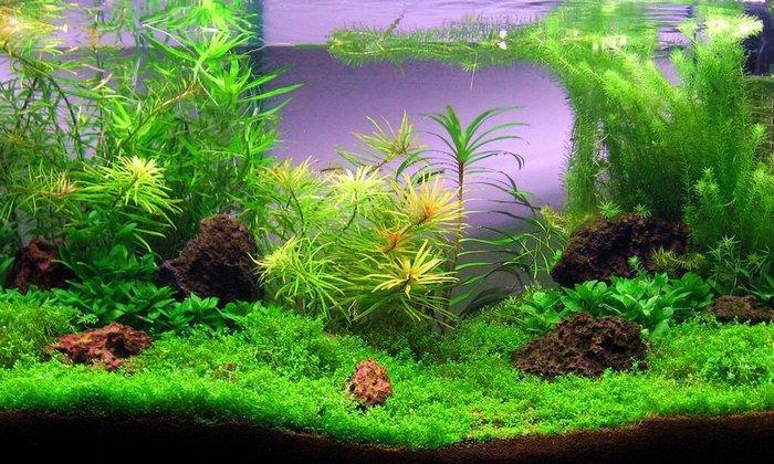 Размещать растения необходимо по бокам и по задней стенке аквариума