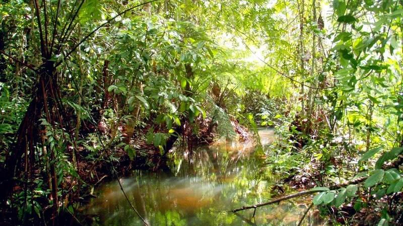 Типичная среда обитания гурами - это канавы, котлованы и реки с небольшим течением