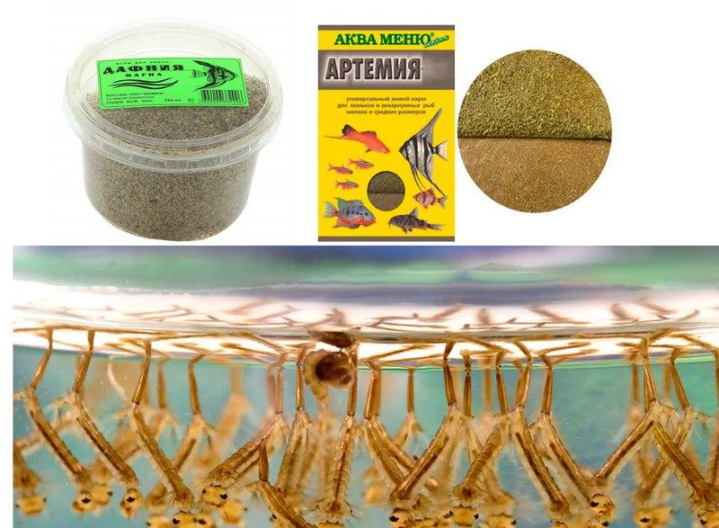 Дафния, артемия, личинки комара