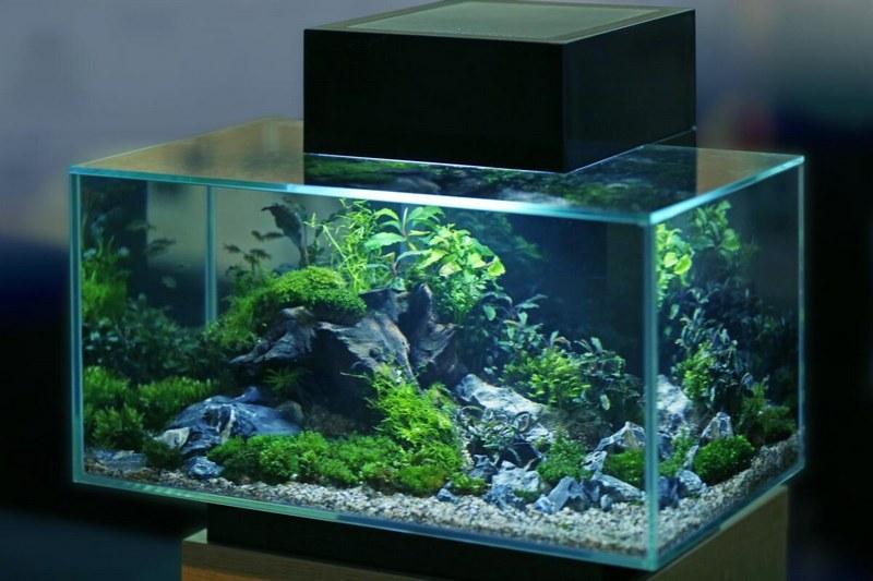 Для кардиналов подойдет аквариум от 30 литров и выше