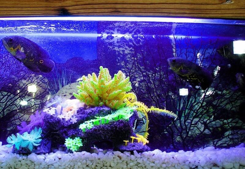 Освещение в аквариуме должно быть спокойным, не утомляющим обитателей подводного царства