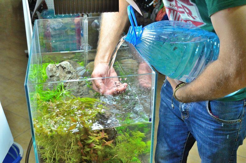 Подмену воды в аквариуме осуществляют не реже одного раза в неделю