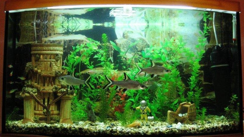 Содержание акульего балу подразумевает приобретение просторного аквариума