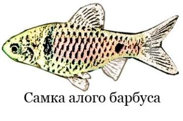 Самка