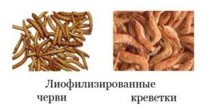 Черви и креветки