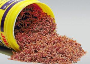 Измельченные черви для подкормки мальков
