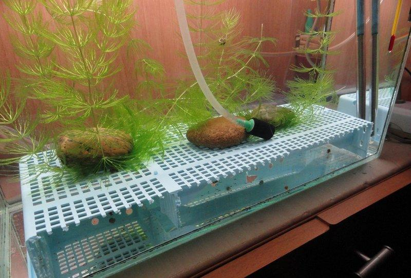 Нерестовик для аквариума в виде крупной сетки