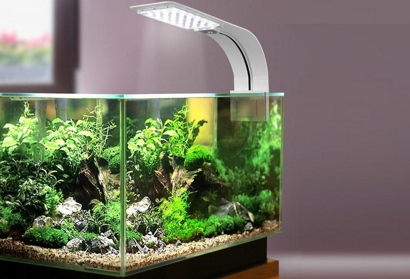 Освещение в аквариуме должно быть умеренным