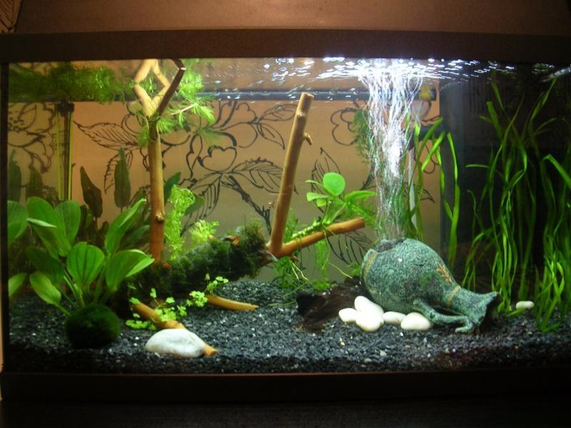 Как оформить аквариум своими руками фото расследования