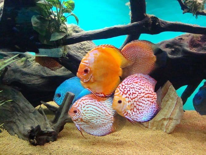 Рядом с аквариумом не должно быть сильного шума