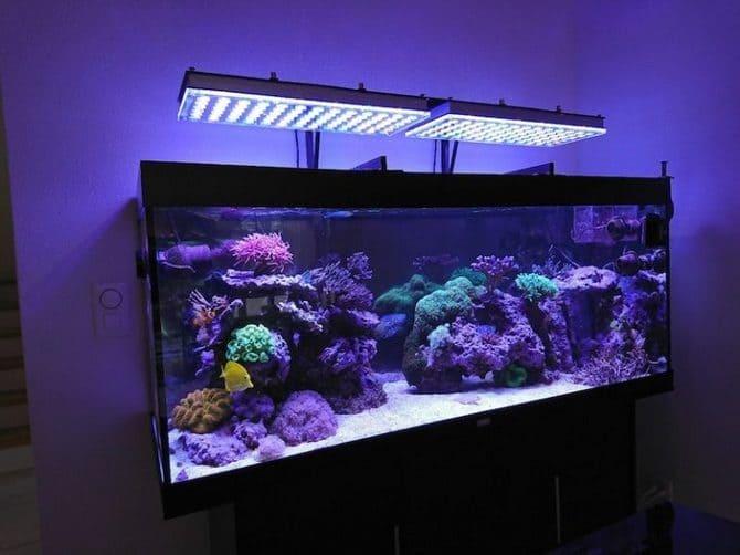 Освещение аквариума не должно нагревать воду, иначе она зацветет