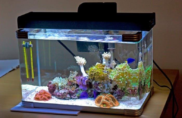 Подготовка аквариума к заселению Данио