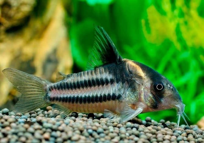 Лучше брать активных рыбок
