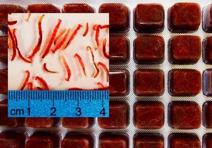 Замороженный корм - червь