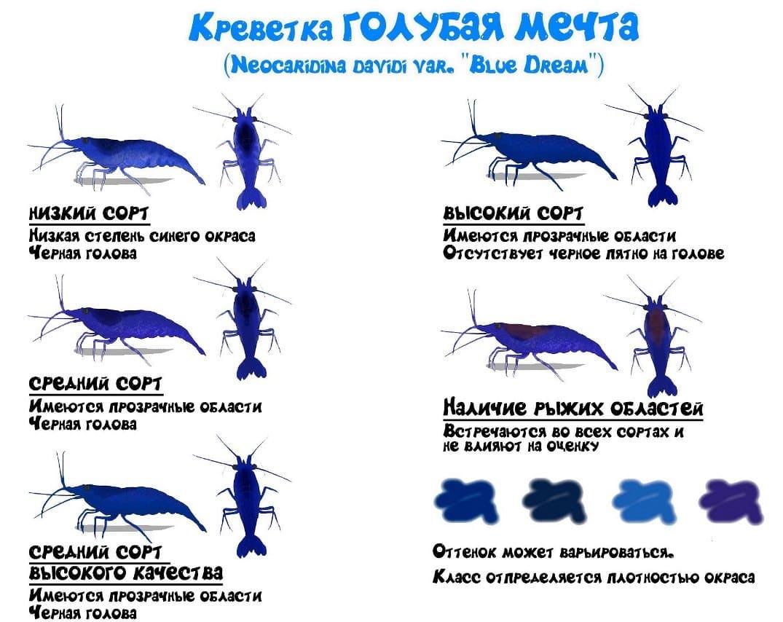 Как определить сорт креветки