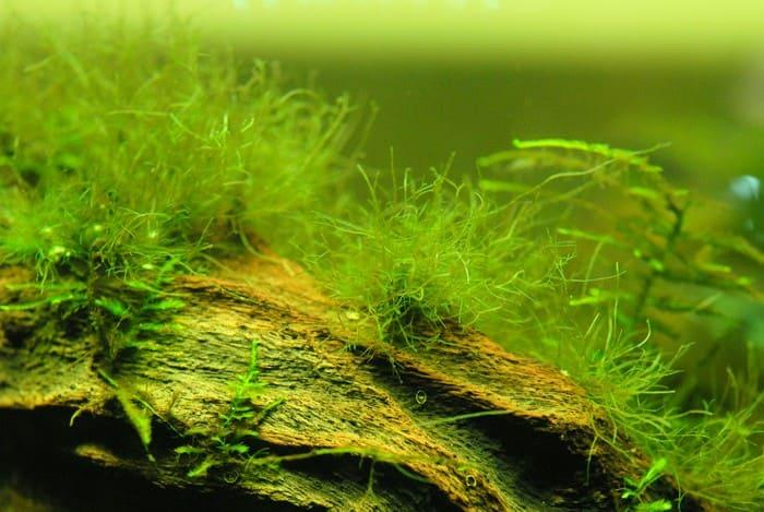 Рост аквариумных растений