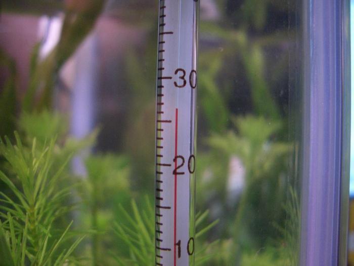 Оптимальной является температура воды от 24 до 30°С