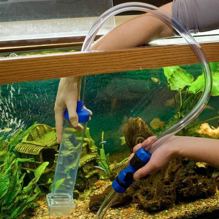 Каждую неделю необходимо обновлять воду в аквариуме на 25-30 %
