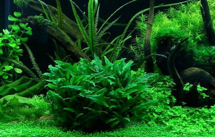 При правильных условиях содержания растение способно радовать своим внешним видом долгое время