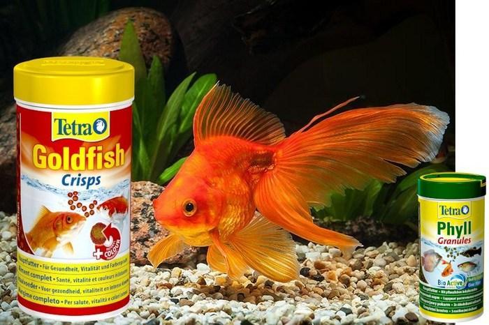 Часто прикармливать золотых рыбок категорически не рекомендуется