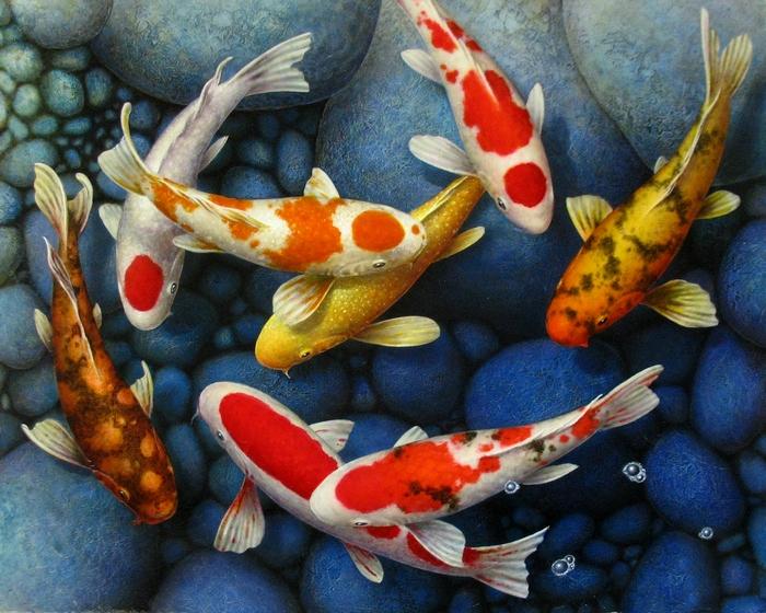 Карпы кои – прекрасные и удивительно красивые обитатели аквариумного мира