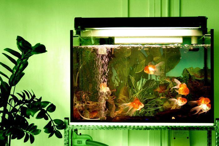 Необходимо выбрать аквариум подходящего объема