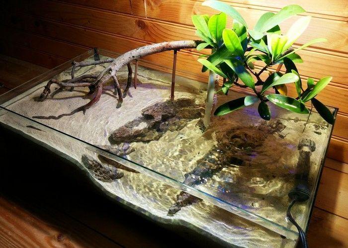 Содержать красных мангровых крабов необходимо в акватеррариуме