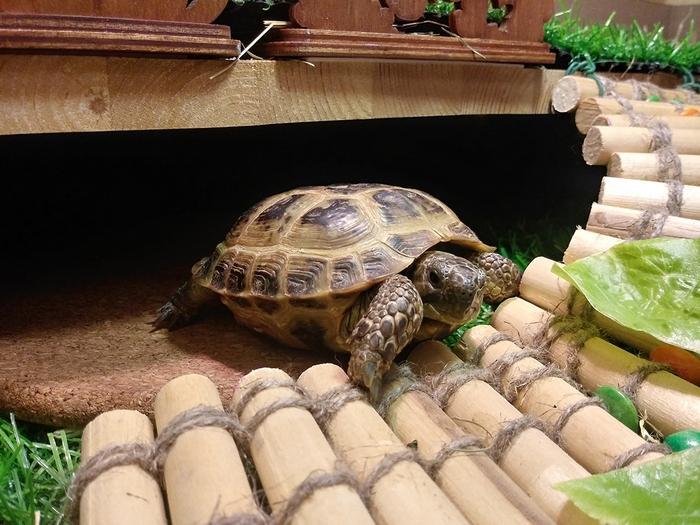 Черепахи — одиночные животные, им не нужна компания