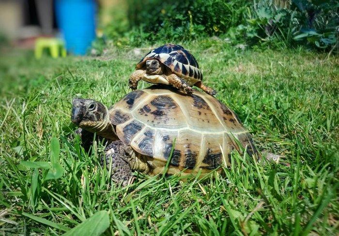 Форма и вид панциря связана с образом жизни черепах