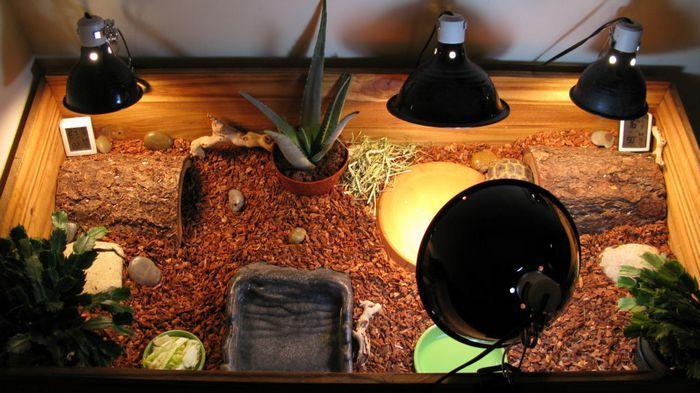 Нужная температура в террариуме достигается с помощью греющей лампы