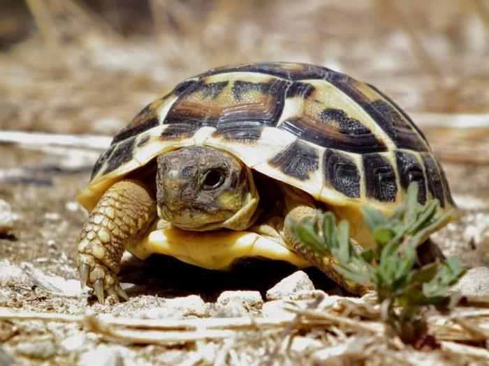 Самым известным редким исчезающим видом является среднеазиатская сухопутная черепаха