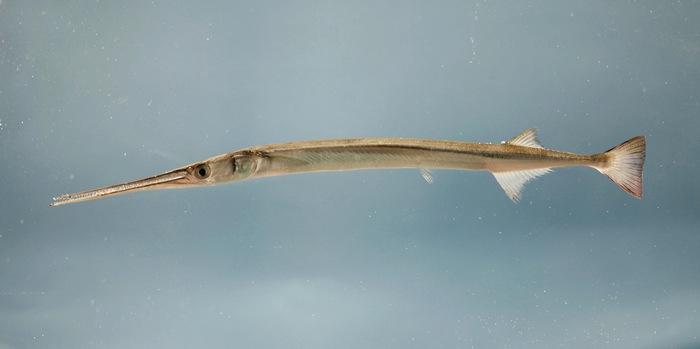 Состав семьи насчитывает 298 видов рыб, входящих в 57 родов